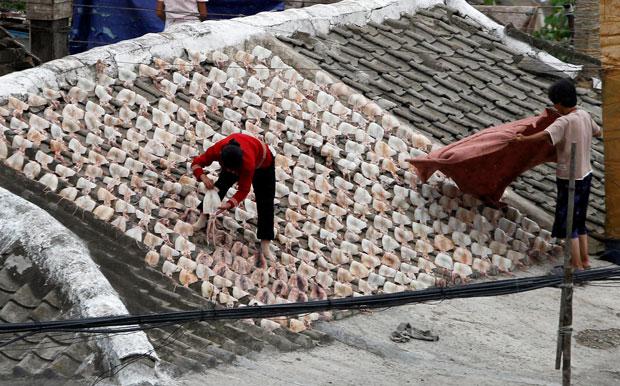 라선시 인근지역에서 북한 주민이 오징어 말리는 작업을 하고 있다.