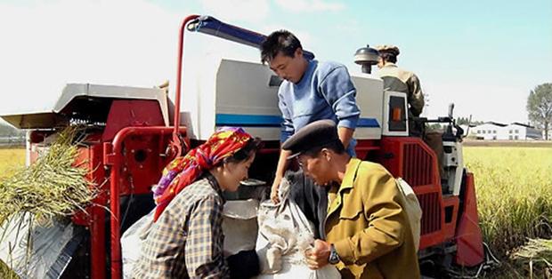 평양시 만경대구역에 있는 칠골남새전문농장에서 농장원들이 농기계를 이용해 추수를 하고 있다.