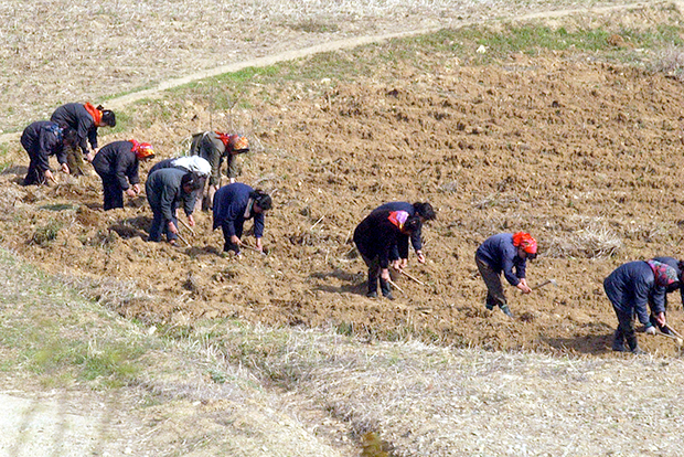 묘향산 인근 밭에서 작업 중인 북한 주민들.