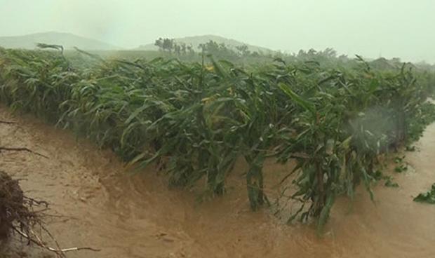 북한 조선중앙통신이 지난 7일 14시경부터 8일 0시 사이에 제13호 태풍 '링링'으로 인해 피해가 발생했다고 9일 보도했다.