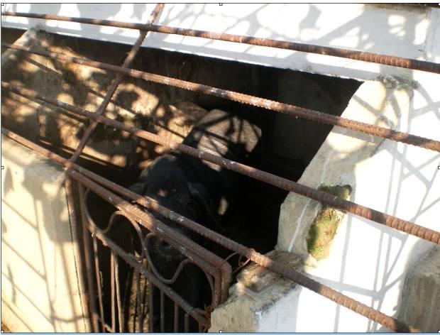 북한 자강도의 한 아파트. 북한의 지방 아파트에서는 돼지우리를 만들어 돼지를 기르는 경우도 있었다. (2011년 8월)