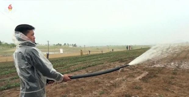 지난 5월 가뭄으로 피해를 입은 황해남도 배천군 수원농장의 농부들이 밭에 물을 주고 있다.