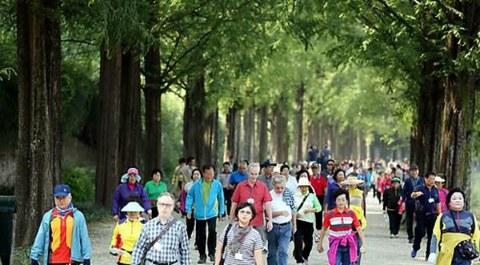 전남 담양군 메타세콰이아 숲에서 열린 '메타세콰이아 건강 걷기 대회에 참가한 군민과 관광객들이 숲길을 걸으며 자연의 정취를 만끽하고 있다.