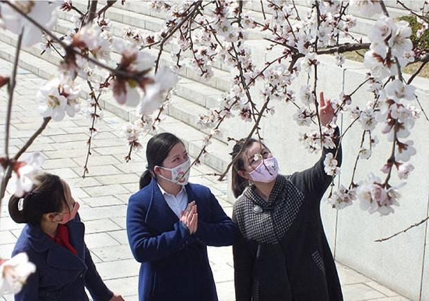 마스크를 쓴 북한 소녀들이 평양 도심에 만개한 봄꽃을 바라보는 모습.