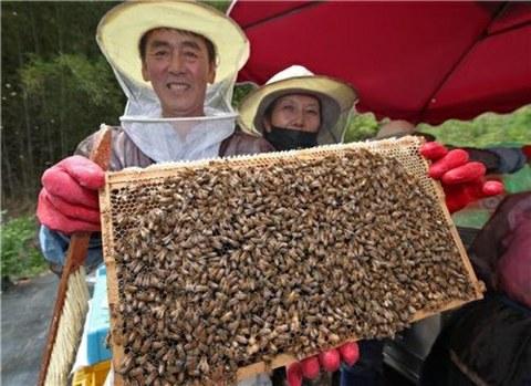 경남 산청군의 한 양봉 농가에서 꿀을 뜨고 있다.
