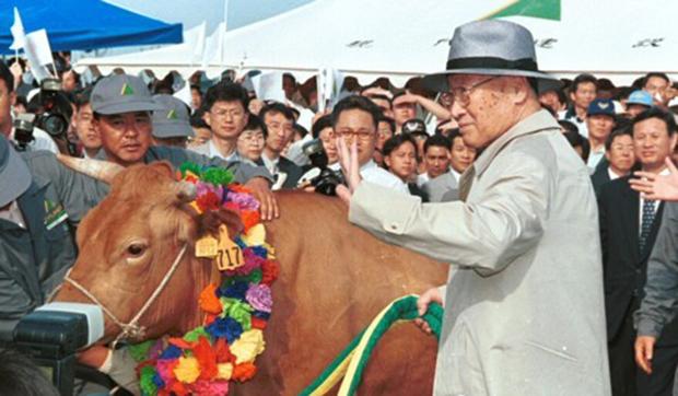사진은 현대그룹 정주영 명예회장이 1998년 6월 소떼를 몰고 방북에 앞서 파주 임진각에서 열린 행사에 참석해 소와 함께 포즈를 취하고 있는 모습.