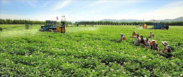 제대군인들을 '방침제대'란 명목으로 투입하는 북한 양강도의 대홍단군 감자산지.