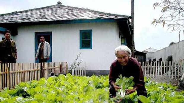북한 황해북도 서흥군에 사는 리봉녀 할머니가 텃밭에서 배추를 가꾸고 있다.