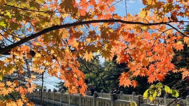 fall_foliage_b