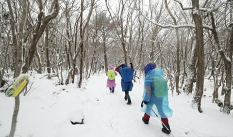등반객들이 한라산 국립공원 성판악 코스를 오르고 있다.