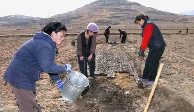 북한 평안남도 룡강군 옥도협동농장에서 옥수수 묘종판 만들기 작업을 하고 있는 여성들.