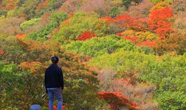 제주 한라산 천아숲길 광령천 계곡의 단풍이 장관을 이루고 있다.